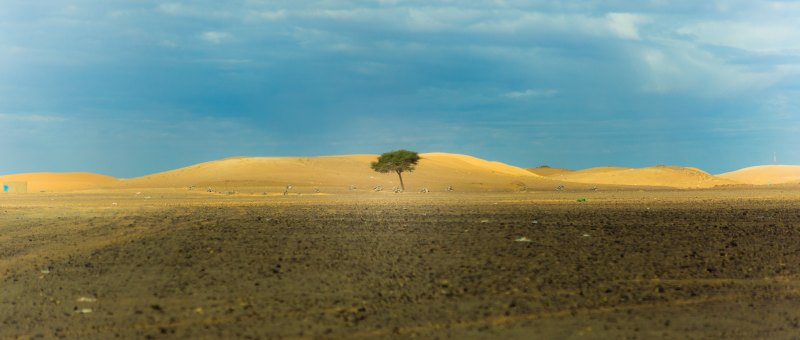 Image of a lone tree in a desert defining resilience